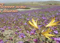 Florecer como un desierto